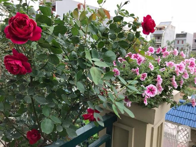 Đến thăm khu vườn hồng rực rỡ của người phụ nữ yêu hoa đất Hải Dương - Ảnh 24.