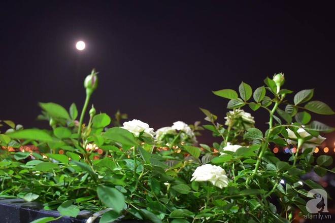 Ngắm ban công chỉ vỏn vẹn 2,2m² nhưng có tới hơn 20 chậu hồng thơm ngát ở Sài Gòn - Ảnh 4.