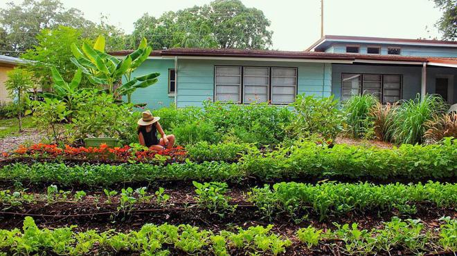 Khu vườn tạo cảm hứng cho hàng nghìn trẻ em yêu thích trồng trọt ở Mỹ - Ảnh 1.
