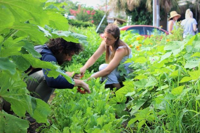 Khu vườn tạo cảm hứng cho hàng nghìn trẻ em yêu thích trồng trọt ở Mỹ - Ảnh 13.
