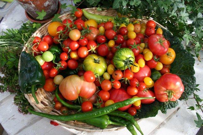Khu vườn bạt ngàn rau quả sạch của người phụ nữ bắt đầu làm vườn từ năm 10 tuổi - Ảnh 9.