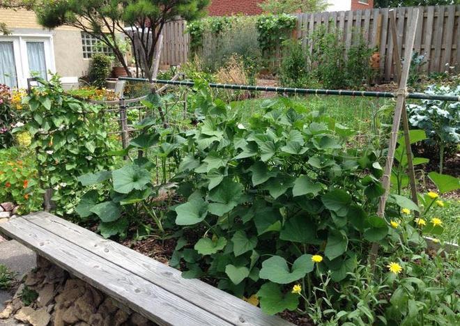 Khu vườn đầy rau xanh và trái ngọt của người phụ nữ bỏ việc giáo viên về làm vườn - Ảnh 5.
