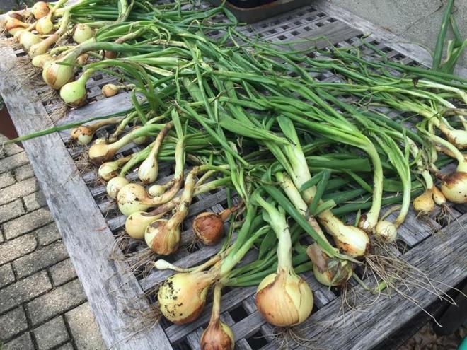 Khu vườn đầy rau xanh và trái ngọt của người phụ nữ bỏ việc giáo viên về làm vườn - Ảnh 11.