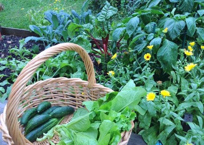 Khu vườn đầy rau xanh và trái ngọt của người phụ nữ bỏ việc giáo viên về làm vườn - Ảnh 12.
