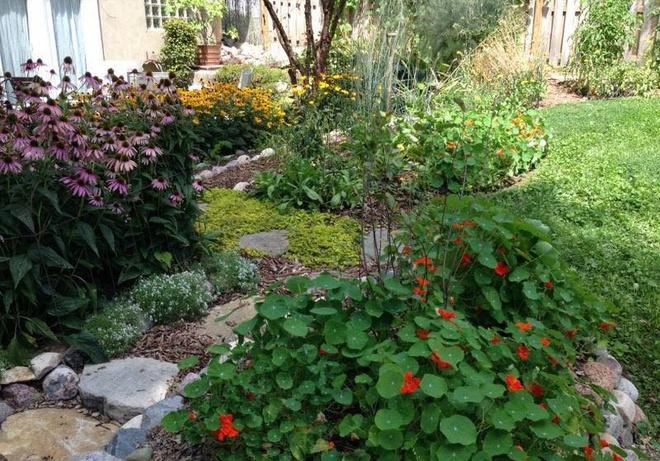 Khu vườn đầy rau xanh và trái ngọt của người phụ nữ bỏ việc giáo viên về làm vườn - Ảnh 14.