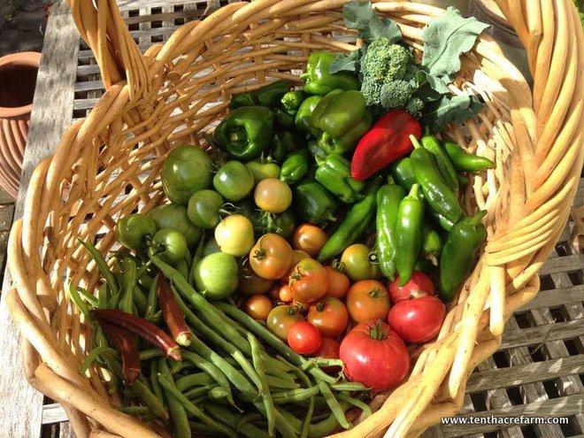 Khu vườn đầy rau xanh và trái ngọt của người phụ nữ bỏ việc giáo viên về làm vườn - Ảnh 18.