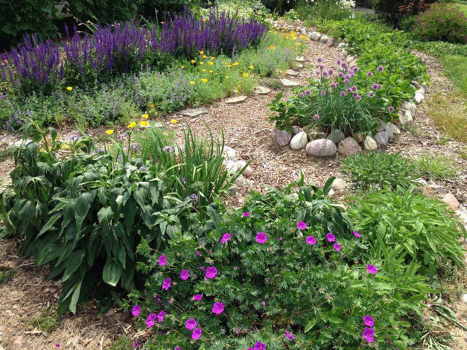 Khu vườn đầy rau xanh và trái ngọt của người phụ nữ bỏ việc giáo viên về làm vườn - Ảnh 20.