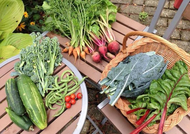 Khu vườn đầy rau xanh và trái ngọt của người phụ nữ bỏ việc giáo viên về làm vườn - Ảnh 25.