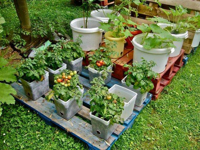 Câu chuyện trồng rau sạch từ chai và thùng nhựa bỏ đi của vị giáo sư Đại học sau khi về hưu - Ảnh 9.