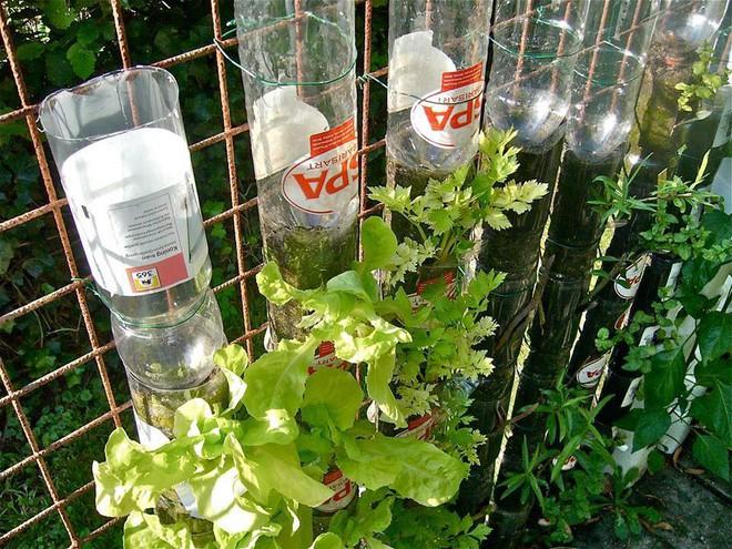 Câu chuyện trồng rau sạch từ chai và thùng nhựa bỏ đi của vị giáo sư Đại học sau khi về hưu - Ảnh 13.