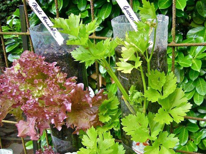 Câu chuyện trồng rau sạch từ chai và thùng nhựa bỏ đi của vị giáo sư Đại học sau khi về hưu - Ảnh 14.