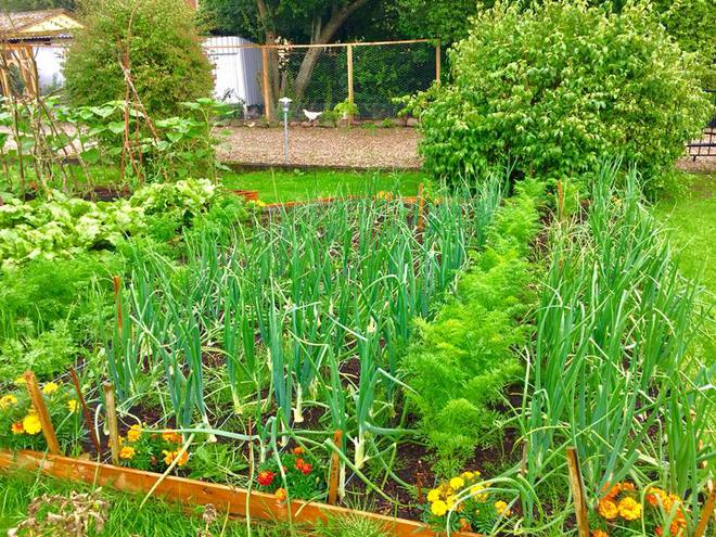 Khu vườn cổ tích đẹp như trong tranh vẽ của hai chàng trai yêu thích trồng rau, nuôi gà từ bé - Ảnh 12.
