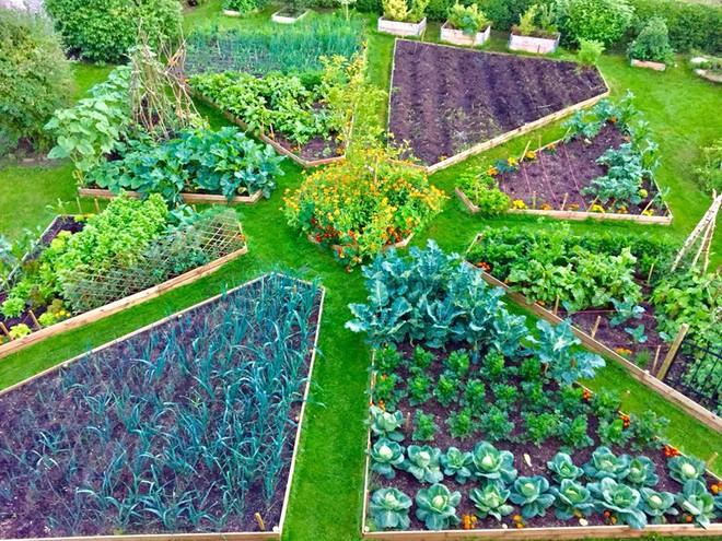 Khu vườn cổ tích đẹp như trong tranh vẽ của hai chàng trai yêu thích trồng rau, nuôi gà từ bé - Ảnh 13.