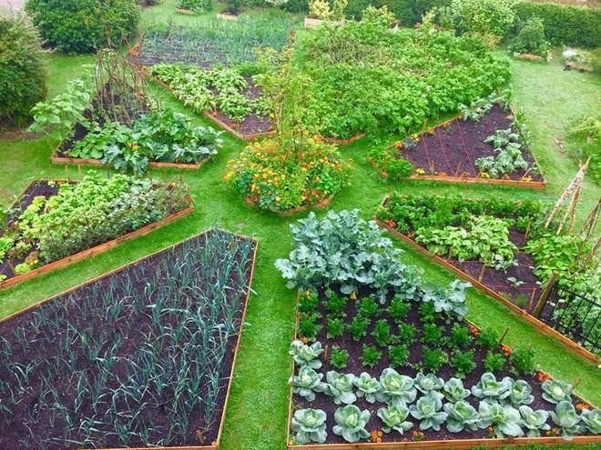Khu vườn cổ tích đẹp như trong tranh vẽ của hai chàng trai yêu thích trồng rau, nuôi gà từ bé - Ảnh 14.