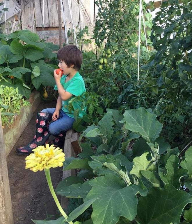 Cuộc sống yên bình của một gia đình nhỏ bên khu vườn cây sai trĩu quả như trong thế giới cổ tích - Ảnh 11.