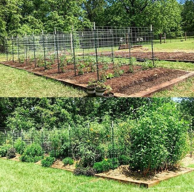 Khu vườn rộng thênh thang đầy ắp rau củ quả sạch của hai chị em gái 9x - Ảnh 3.