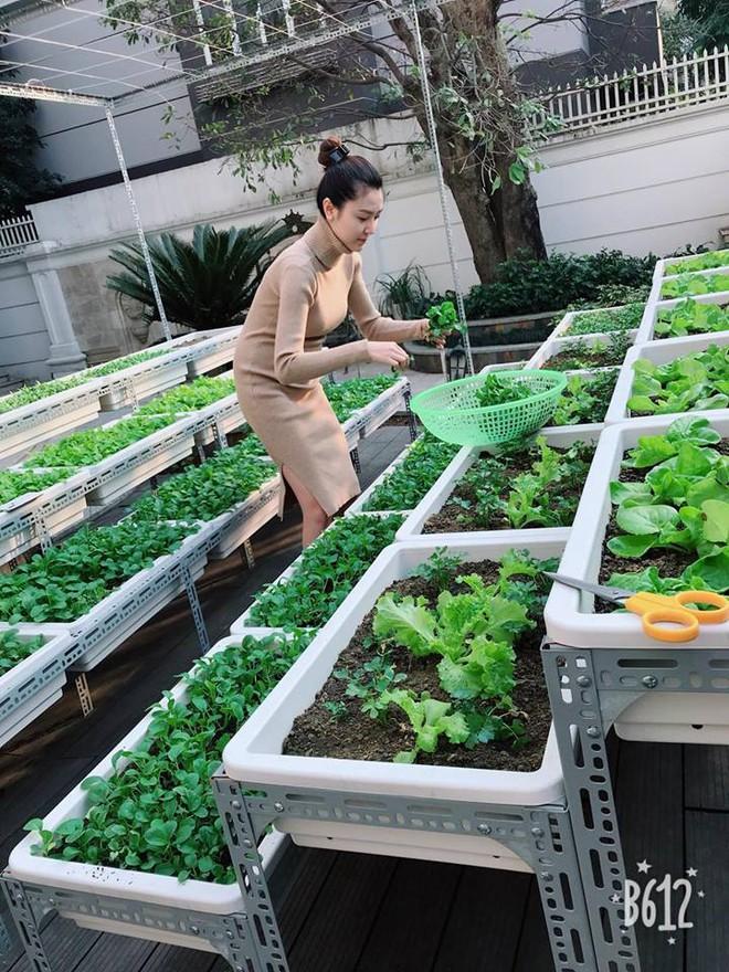Vườn rau sạch được trồng trên sân thượng biệt thự tiền tỷ của Nữ hoàng sắc đẹp Toàn cầu Ngọc Duyên - Ảnh 6.