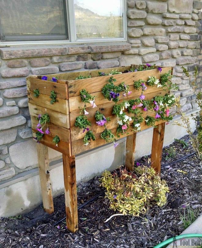 img20180330105630706 Trang trí nhà với bồn cây   giải pháp để tiết kiệm nhưng khiến nhà đẹp bất ngờ