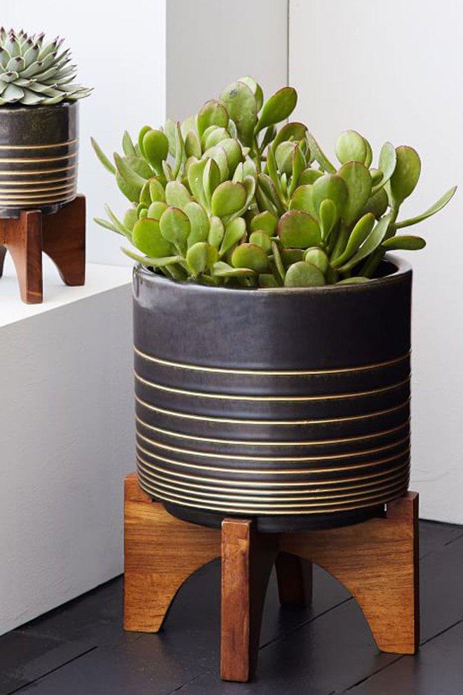 15 kiểu chậu cây tạo nên vẻ đẹp cuốn hút cho không gian sống của bạn - Ảnh 3.