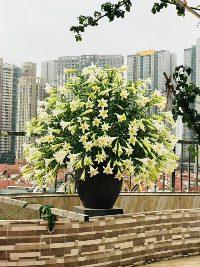 Tháng 4 về, ai cũng dành một góc nhà tinh khôi trong trẻo với hoa loa kèn - Ảnh 2.