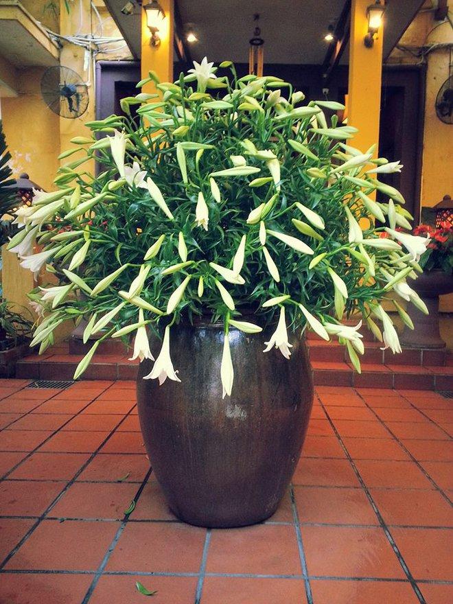 Tháng 4 về, ai cũng dành một góc nhà tinh khôi trong trẻo với hoa loa kèn - Ảnh 4.