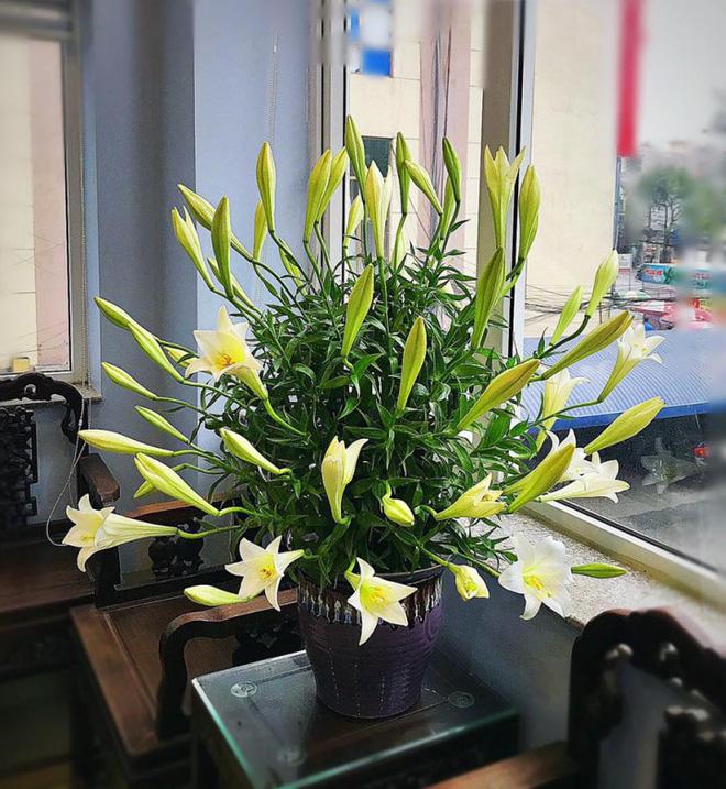 Tháng 4 về, ai cũng dành một góc nhà tinh khôi trong trẻo với hoa loa kèn - Ảnh 8.