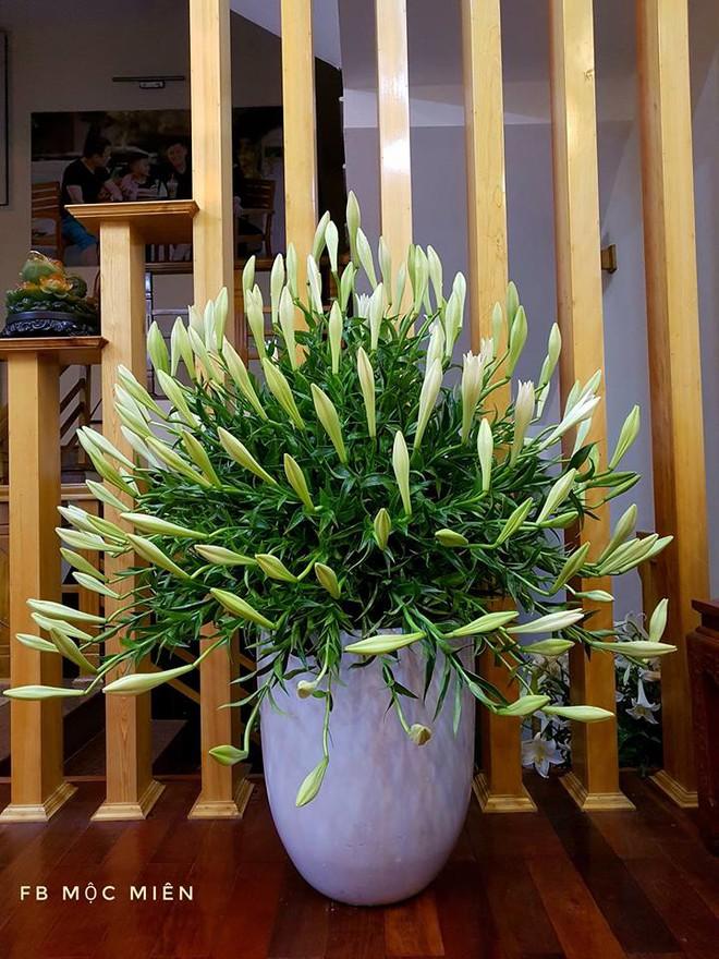 Tháng 4 về, ai cũng dành một góc nhà tinh khôi trong trẻo với hoa loa kèn - Ảnh 10.