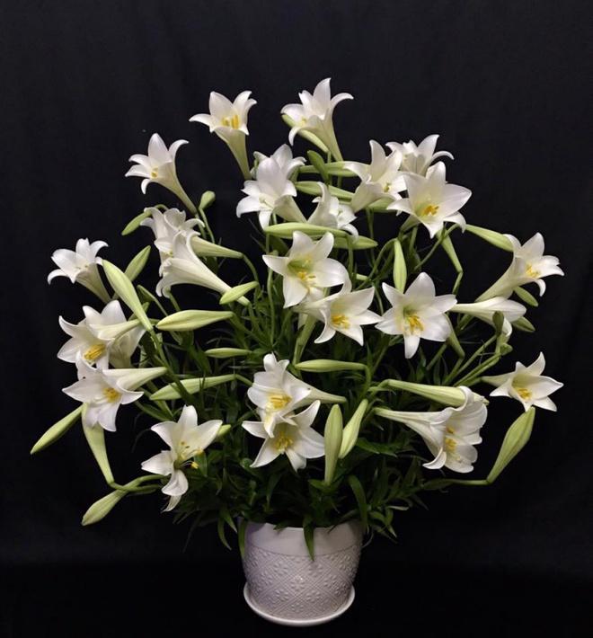 Tháng 4 về, ai cũng dành một góc nhà tinh khôi trong trẻo với hoa loa kèn - Ảnh 12.