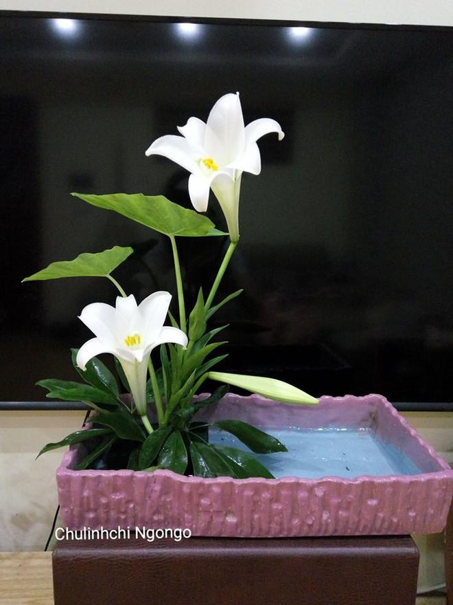 Tháng 4 về, ai cũng dành một góc nhà tinh khôi trong trẻo với hoa loa kèn - Ảnh 13.