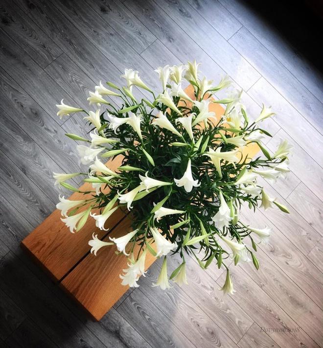 Tháng 4 về, ai cũng dành một góc nhà tinh khôi trong trẻo với hoa loa kèn - Ảnh 14.