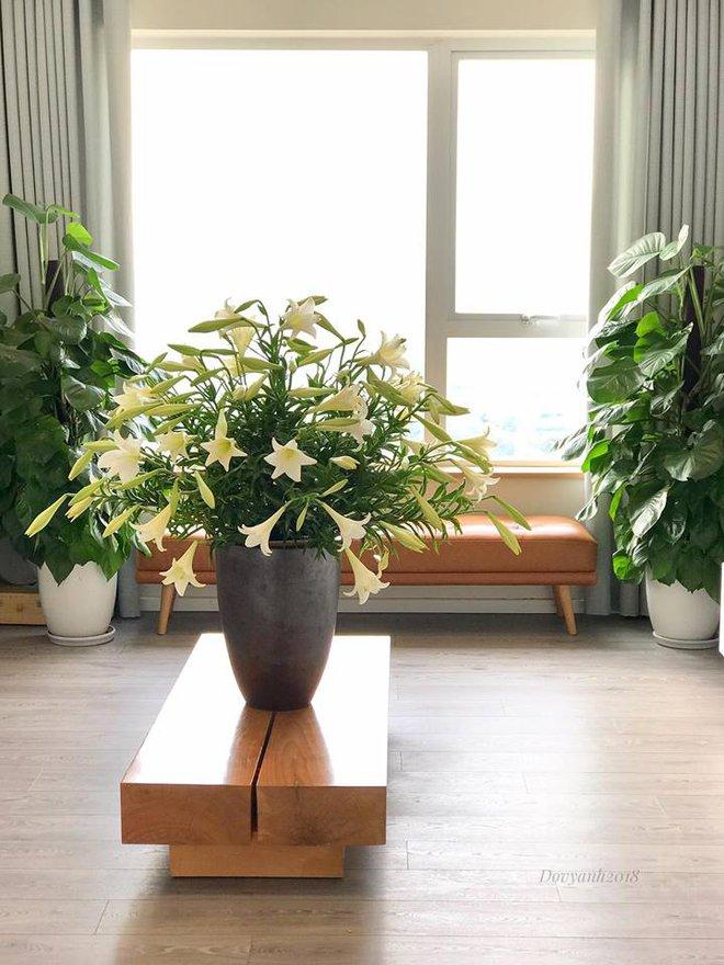 Tháng 4 về, ai cũng dành một góc nhà tinh khôi trong trẻo với hoa loa kèn - Ảnh 15.