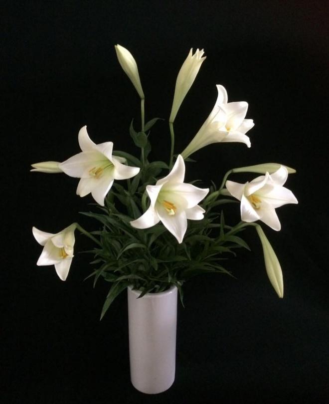 Tháng 4 về, ai cũng dành một góc nhà tinh khôi trong trẻo với hoa loa kèn - Ảnh 17.