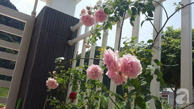 Ngôi nhà hoa hồng nhỏ nhắn và vô cùng dễ thương giữa thành phố Hạ Long của mẹ trẻ xinh đẹp - Ảnh 3.