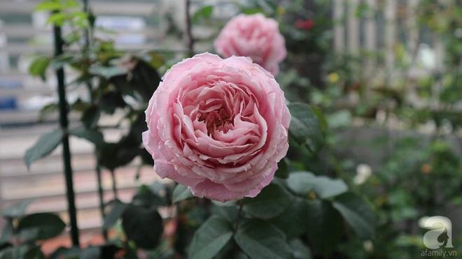 Ngôi nhà hoa hồng nhỏ nhắn và vô cùng dễ thương giữa thành phố Hạ Long của mẹ trẻ xinh đẹp - Ảnh 4.