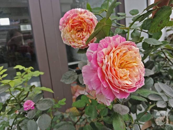 Ngôi nhà hoa hồng nhỏ nhắn và vô cùng dễ thương giữa thành phố Hạ Long của mẹ trẻ xinh đẹp - Ảnh 6.