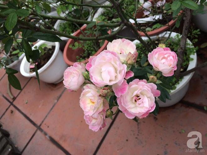 Ngôi nhà hoa hồng nhỏ nhắn và vô cùng dễ thương giữa thành phố Hạ Long của mẹ trẻ xinh đẹp - Ảnh 7.