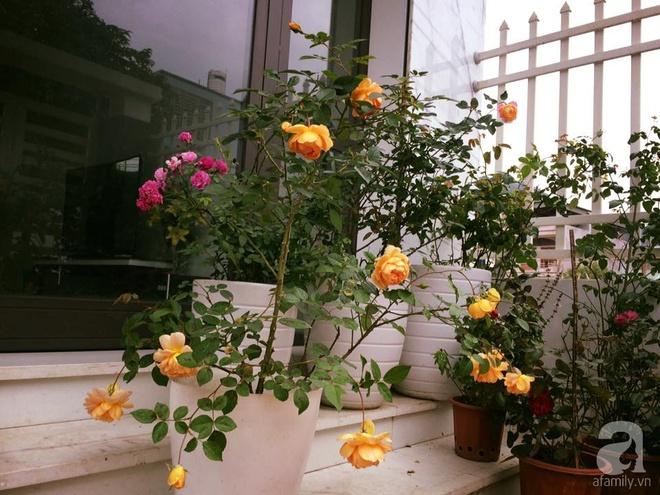 Ngôi nhà hoa hồng nhỏ nhắn và vô cùng dễ thương giữa thành phố Hạ Long của mẹ trẻ xinh đẹp - Ảnh 8.