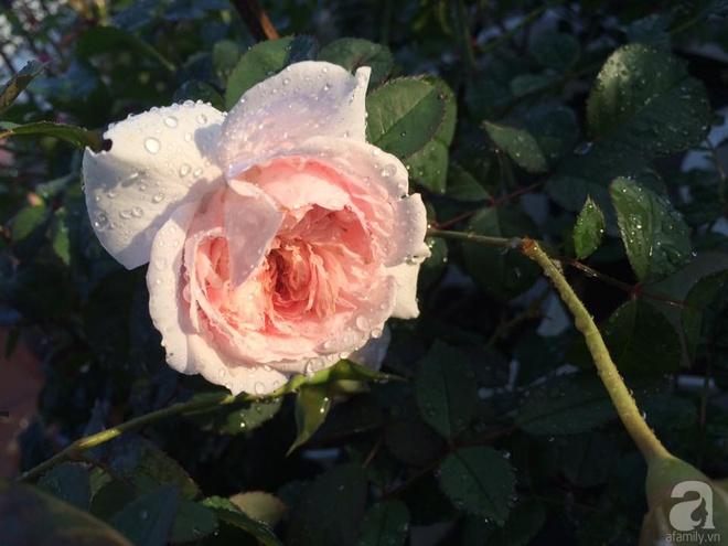 Ngôi nhà hoa hồng nhỏ nhắn và vô cùng dễ thương giữa thành phố Hạ Long của mẹ trẻ xinh đẹp - Ảnh 11.