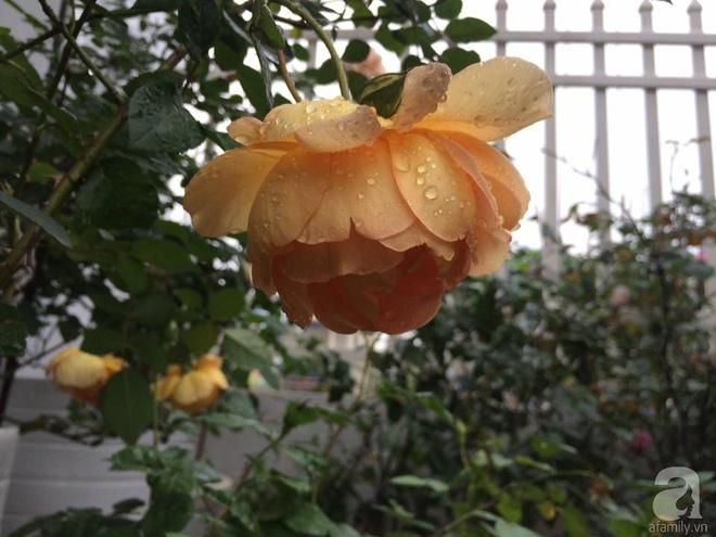 Ngôi nhà hoa hồng nhỏ nhắn và vô cùng dễ thương giữa thành phố Hạ Long của mẹ trẻ xinh đẹp - Ảnh 12.