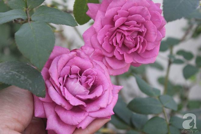 Ngôi nhà hoa hồng nhỏ nhắn và vô cùng dễ thương giữa thành phố Hạ Long của mẹ trẻ xinh đẹp - Ảnh 16.