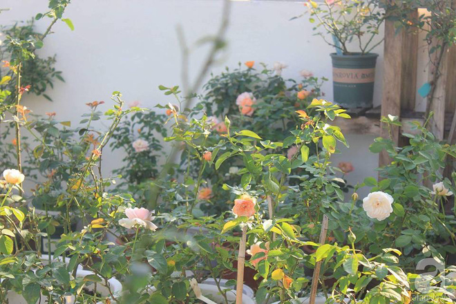 Ngôi nhà hoa hồng nhỏ nhắn và vô cùng dễ thương giữa thành phố Hạ Long của mẹ trẻ xinh đẹp - Ảnh 18.