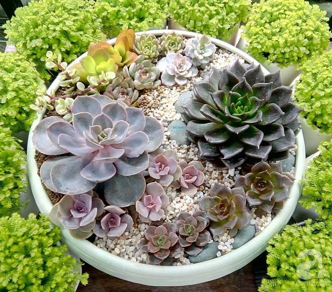 Vườn sen đá đẹp ngất ngây của chàng trai Hà Nội dành cả tuổi thanh xuân cho niềm đam mê của mình - Ảnh 2.
