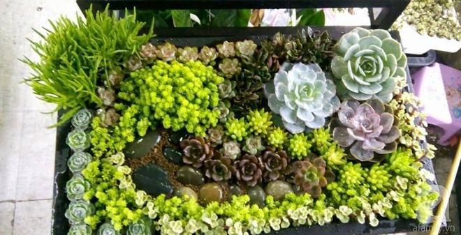 Vườn sen đá đẹp ngất ngây của chàng trai Hà Nội dành cả tuổi thanh xuân cho niềm đam mê của mình - Ảnh 10.