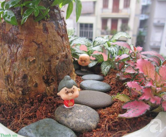 Vườn sen đá đẹp ngất ngây của chàng trai Hà Nội dành cả tuổi thanh xuân cho niềm đam mê của mình - Ảnh 14.