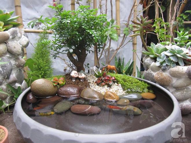 Vườn sen đá đẹp ngất ngây của chàng trai Hà Nội dành cả tuổi thanh xuân cho niềm đam mê của mình - Ảnh 18.