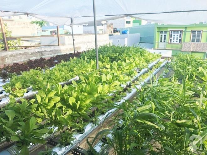 Vườn thủy canh bạt ngàn rau quả trên sân thượng thu hoạch đến gần 100kg mỗi vụ của chàng sinh viên kinh tế 9x - Ảnh 2.