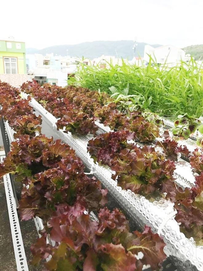 Vườn thủy canh bạt ngàn rau quả trên sân thượng thu hoạch đến gần 100kg mỗi vụ của chàng sinh viên kinh tế 9x - Ảnh 3.