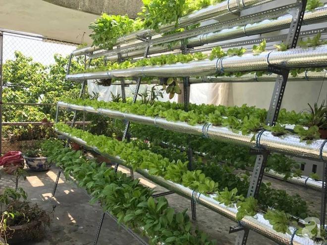 Vườn thủy canh bạt ngàn rau quả trên sân thượng thu hoạch đến gần 100kg mỗi vụ của chàng sinh viên kinh tế 9x - Ảnh 9.