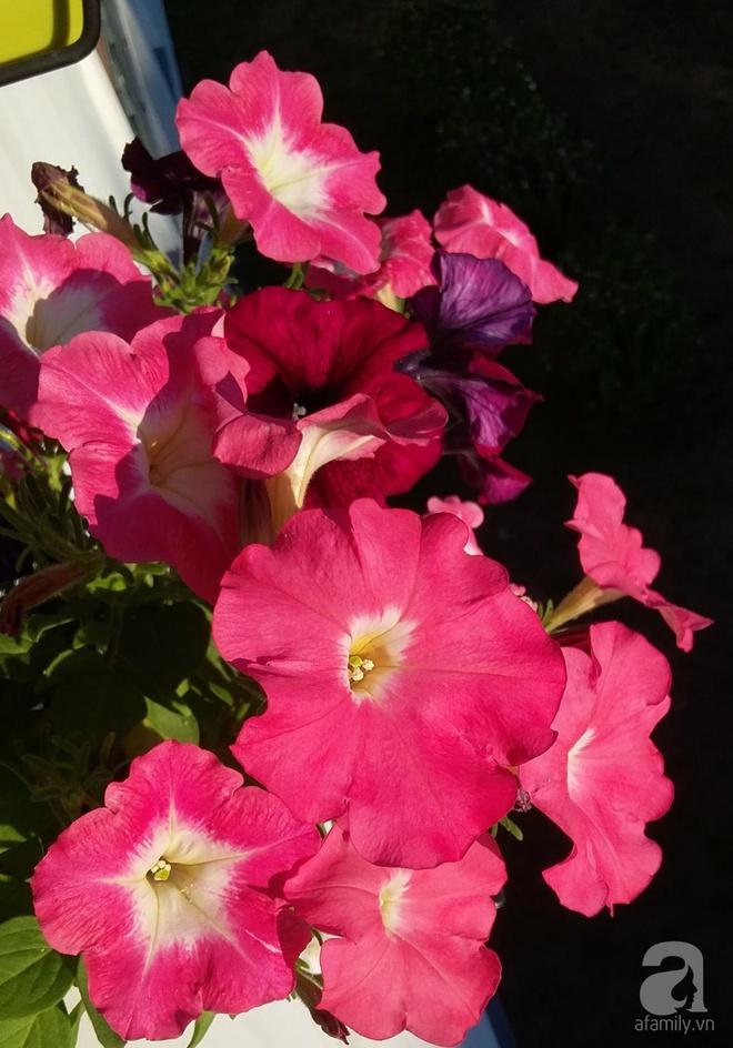 Ban công vỏn vẹn 6m² nhưng đẹp lung linh nhờ muôn sắc hoa do người vợ trẻ tự trồng - Ảnh 4.