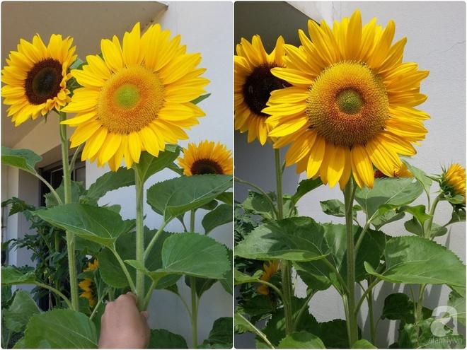 Ban công vỏn vẹn 6m² nhưng đẹp lung linh nhờ muôn sắc hoa do người vợ trẻ tự trồng - Ảnh 7.